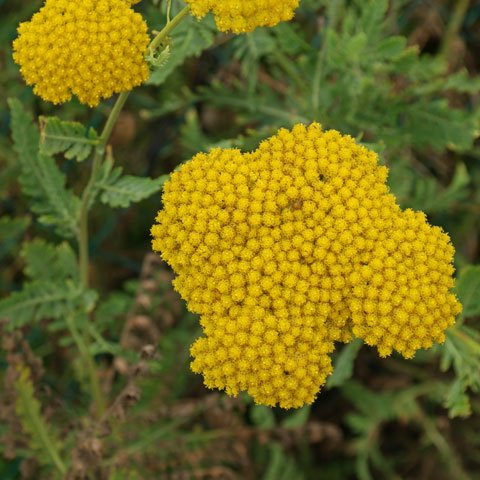 Clases de flores amarillas clases de flores amarillas - Clases de flores amarillas ...