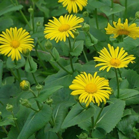 Identificacion De Plantas Flores Amarillas Y Naranjas