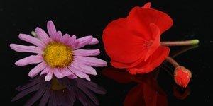 Rojo y rosa